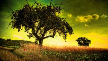 Natur-Wallpapers Gratis